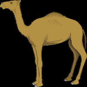 Llama clipart 6 image 3