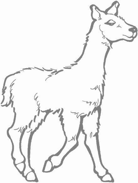 Llama clipart 6