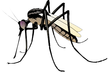 Backgrounds for cartoon mosquito transparent background clip art