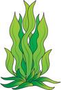 Cartoon seaweed clipart