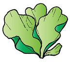 Cartoon seaweed clipart free clipart images