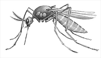 Free mosquito bw clipart graphics images and