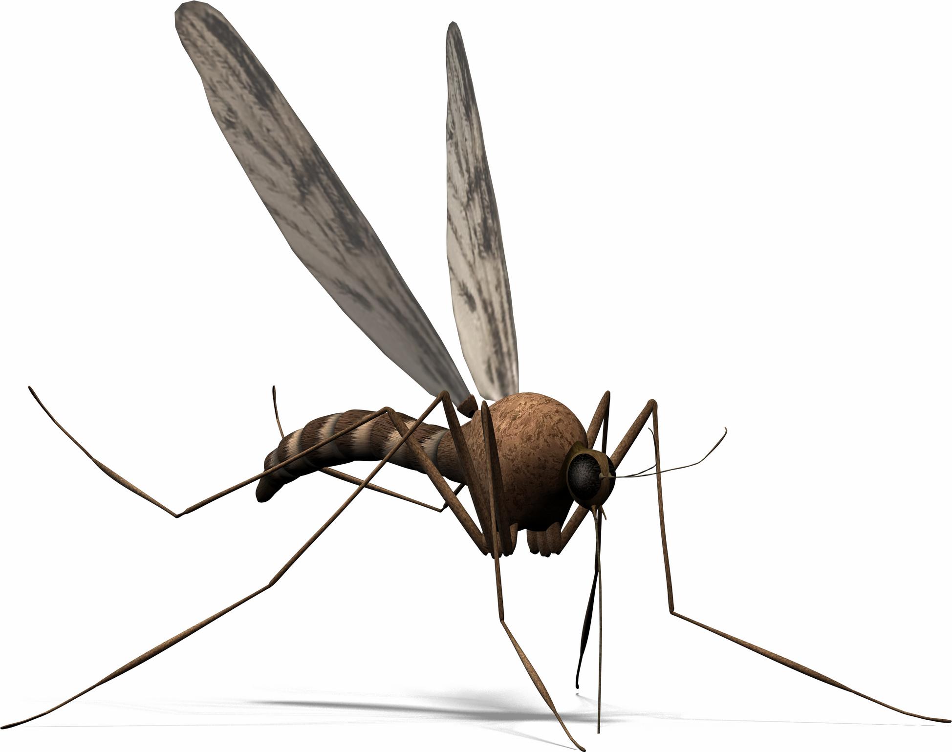 Mosquito clipart 0 2