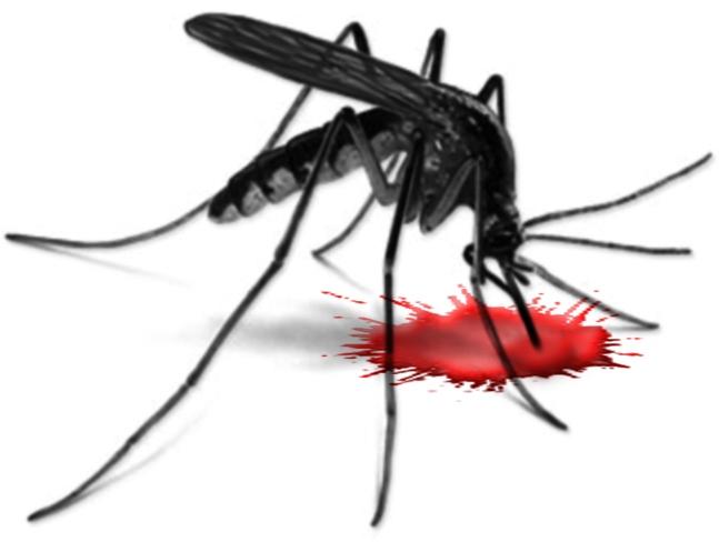 Mosquito clipart 2 2