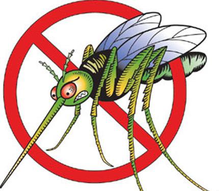 Mosquito clipart 2