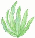 Paintings of seaweed cartoon seaweed clip art jobspapa crafts