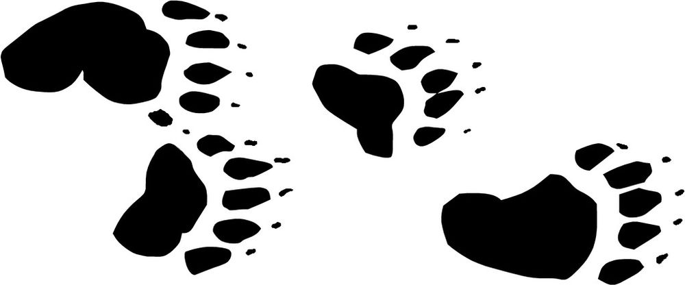 Bear paw print bear tracks paw print decals 10 choose color ebay clipart