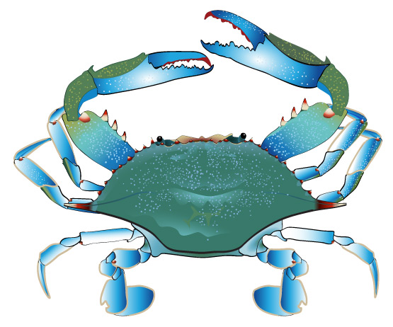 Crab clip art black and white free clipart image clip art library