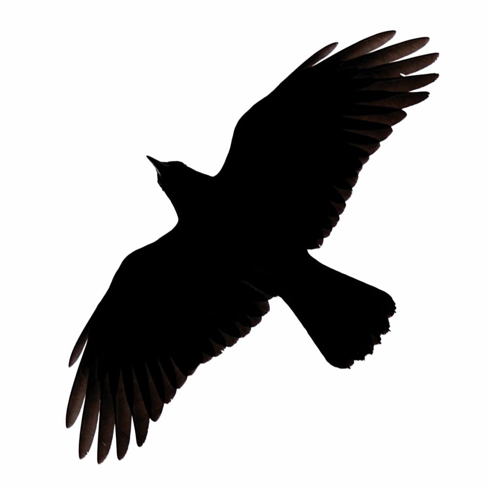 Crow clipart birds and clip art photo crowclipart 2 clipart