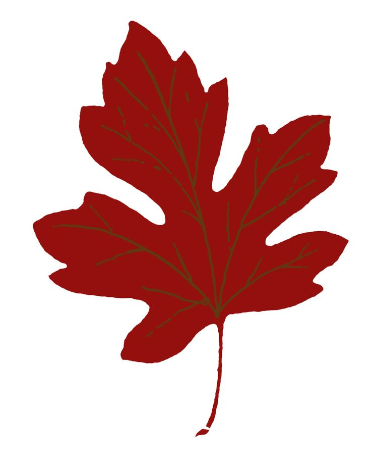 Fall leaves clip art images on fall clip drawings and