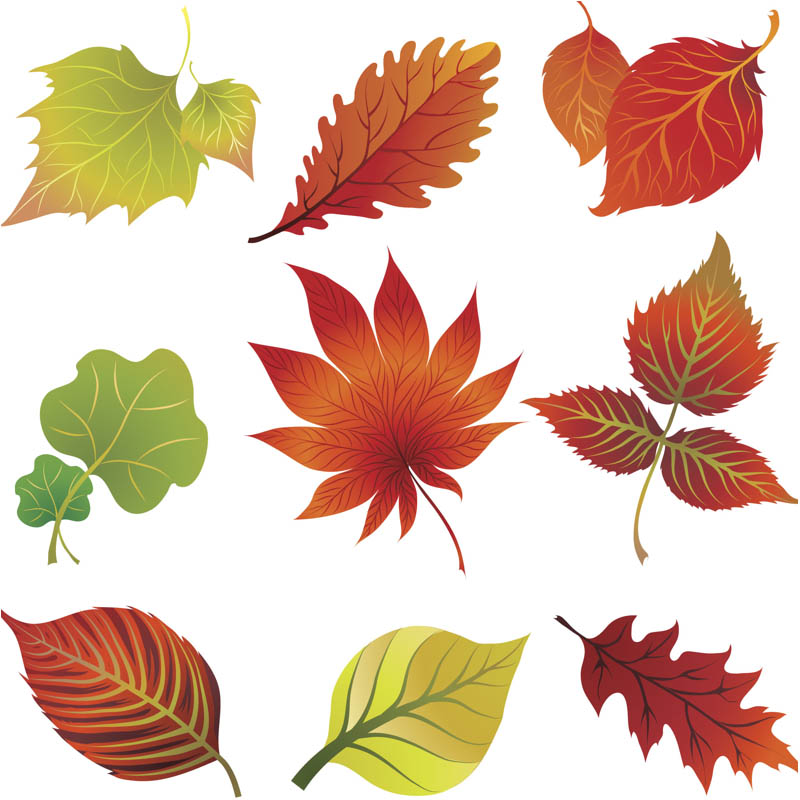 Fall leaves clip art vector vector graphics blog