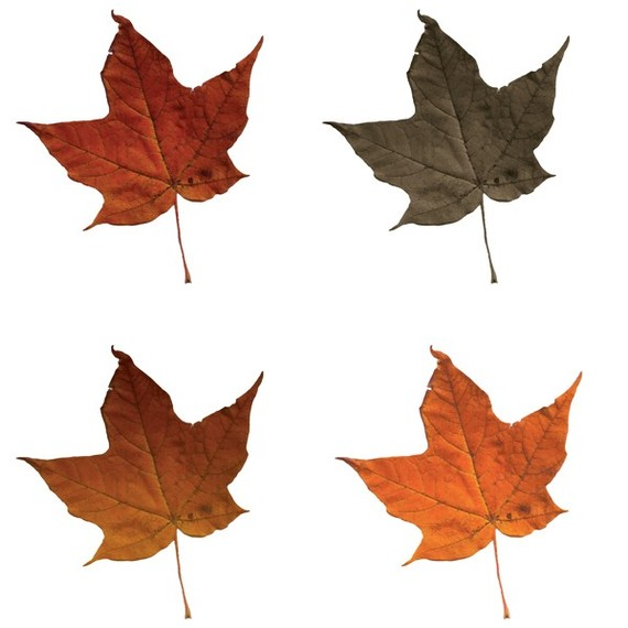 Fall leaves fall leaf clipart no background free images 3