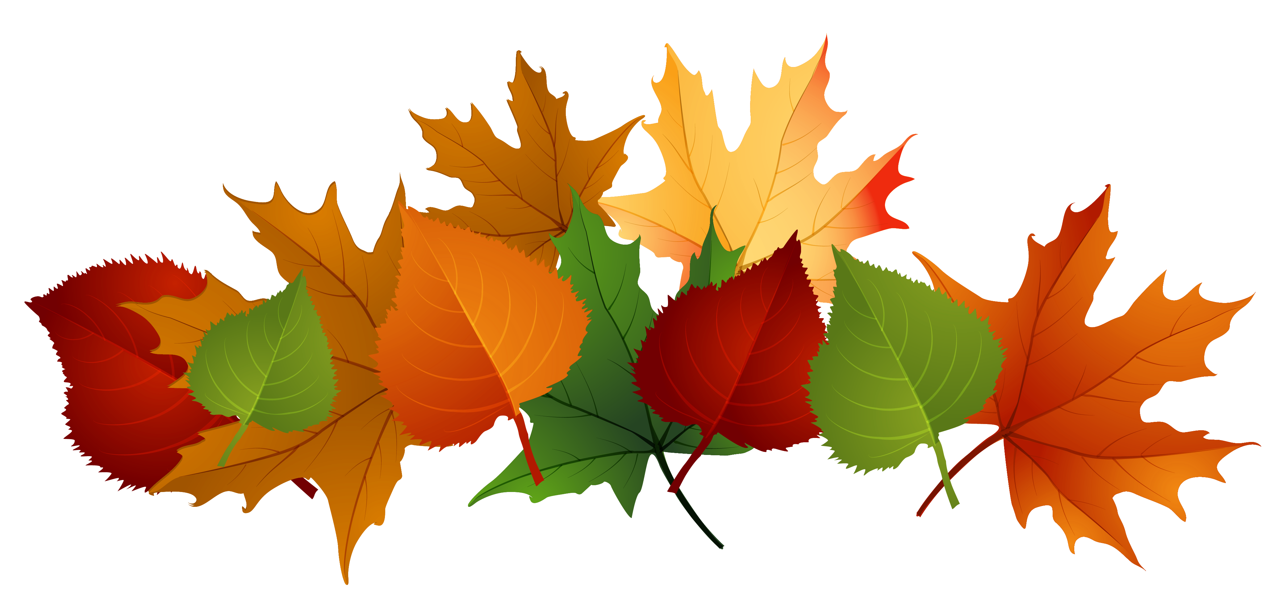 Fall leaves fall leaf clipart no background free images