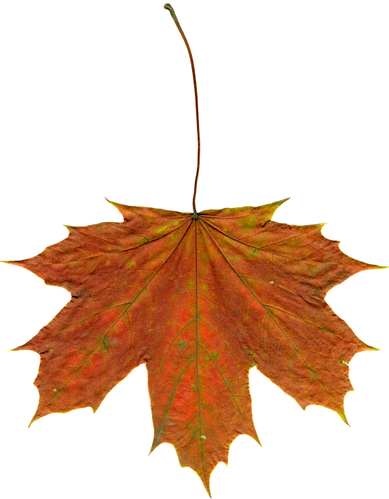 Fall leaves free photo leaves autumn clipart image on pixabay