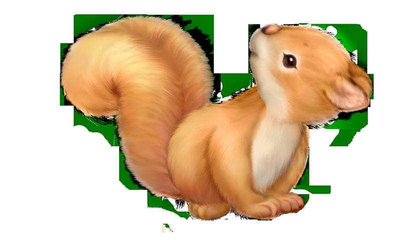 Squirrel clip art clipart