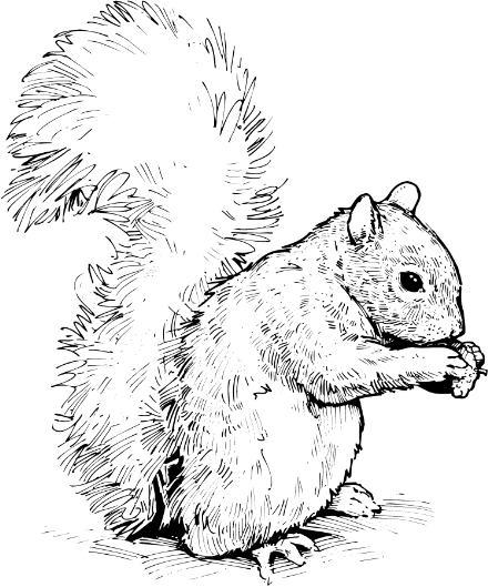 Squirrel clip art image 2