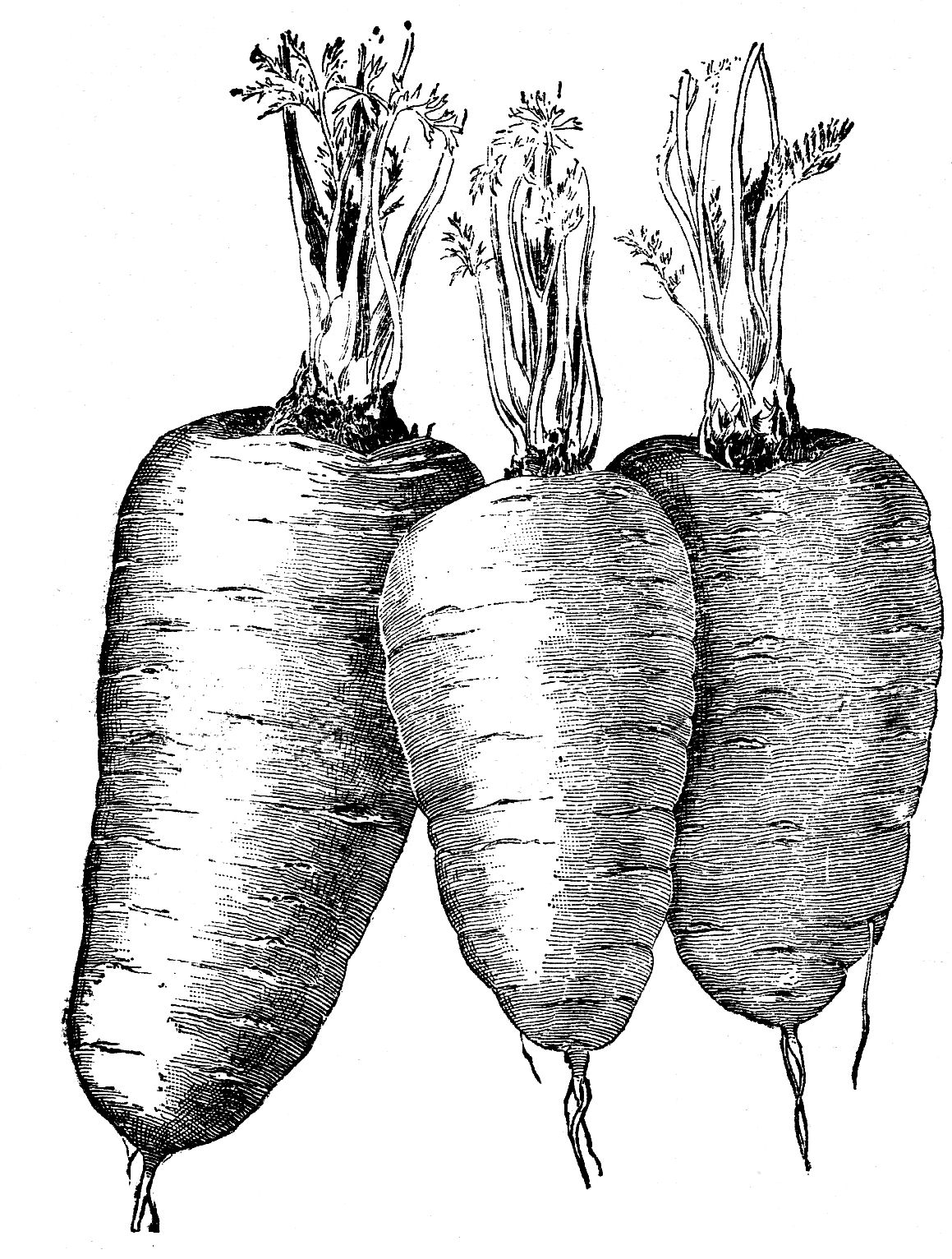 Vegetables  black and white fruits clip art 3