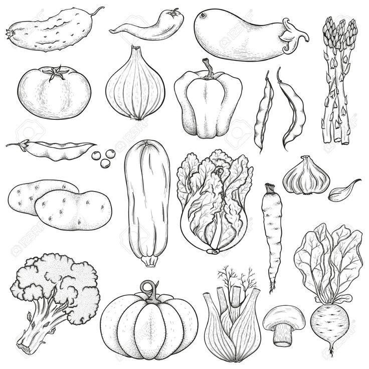 Vegetables  black and white tattoo 2 images on botanical illustration clip art