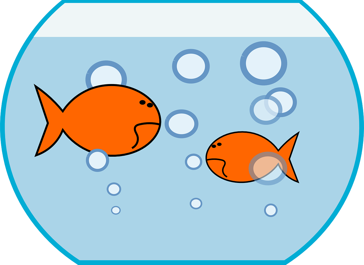 Fish bowl clipart fish pond pencil and in color bowl