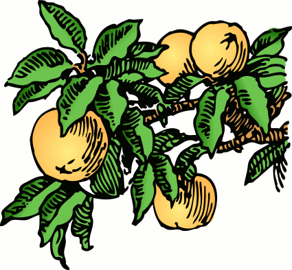 Free peach clipart 1 page of clip art