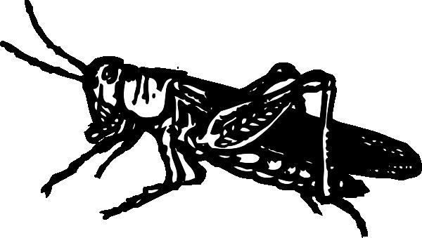 Grasshopper clip art free vector 4vector