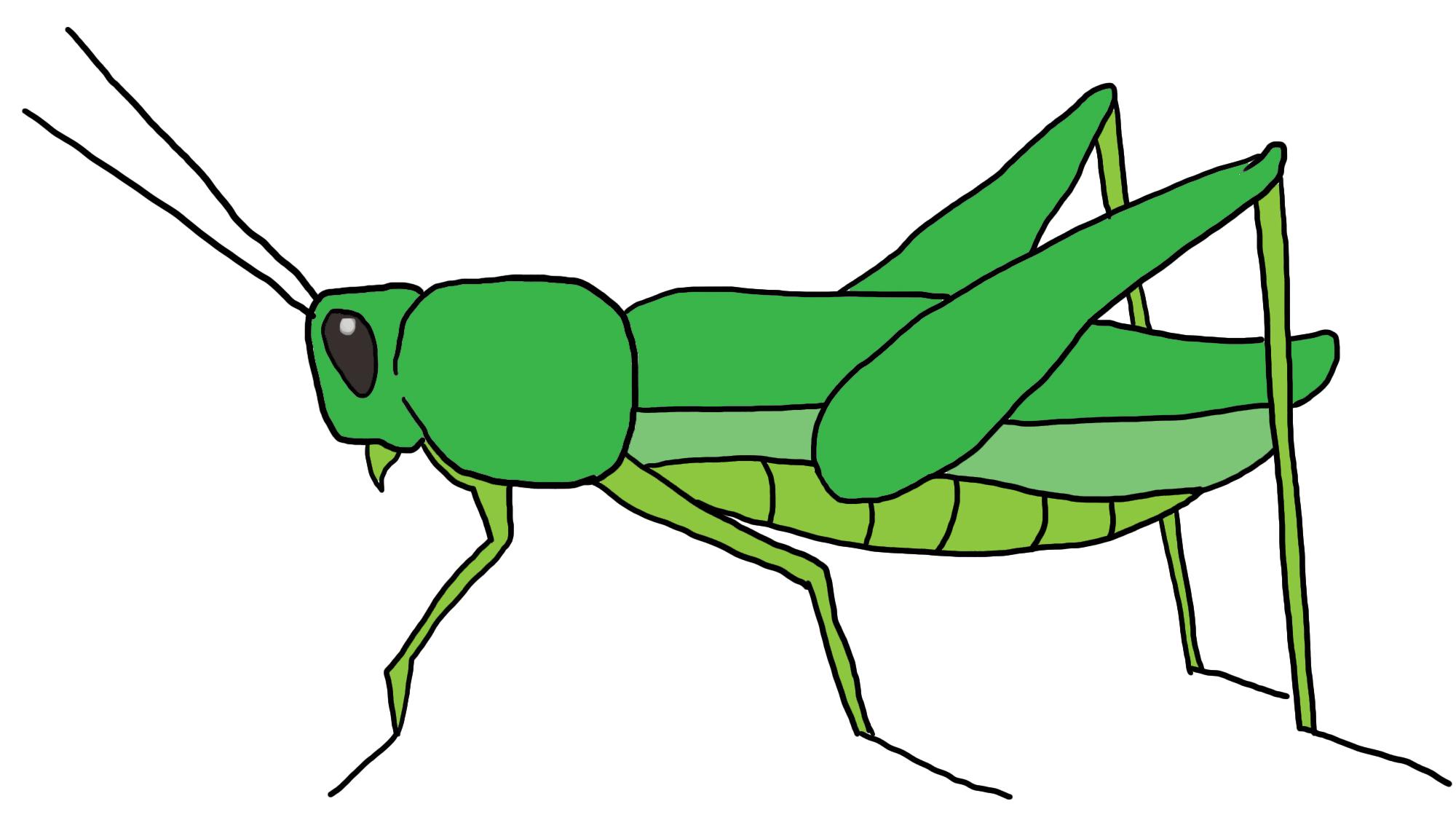 Grasshopper clipart 7