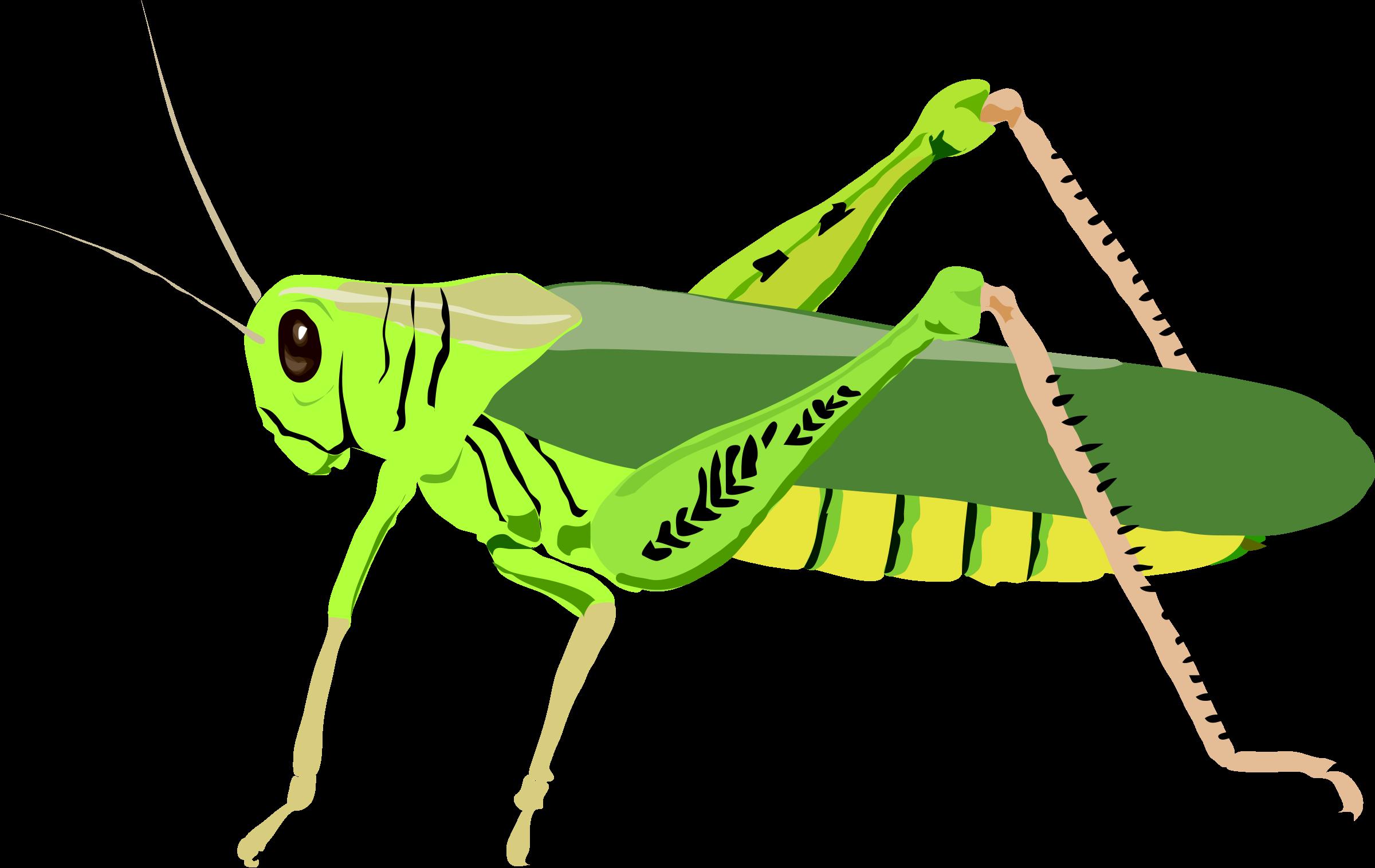 Grasshopper clipart images free
