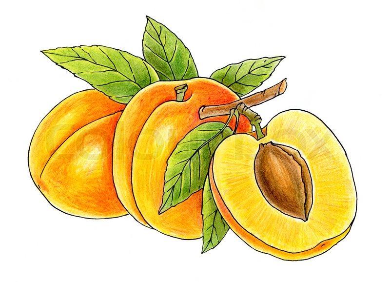 Peach clip art peach clipart fans 4