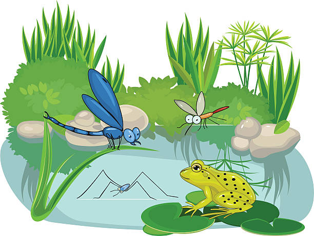 Pond clipart pond ecosystem pencil and in color