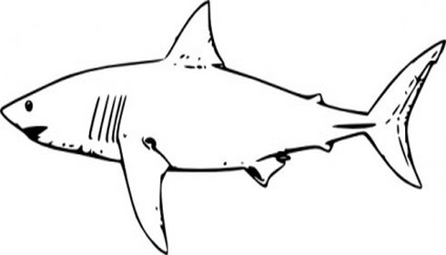 Shark fin clipart shark free clipart