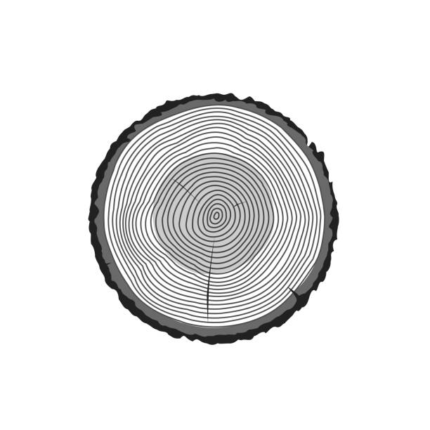 Wood clipart tree log pencil and in color wood