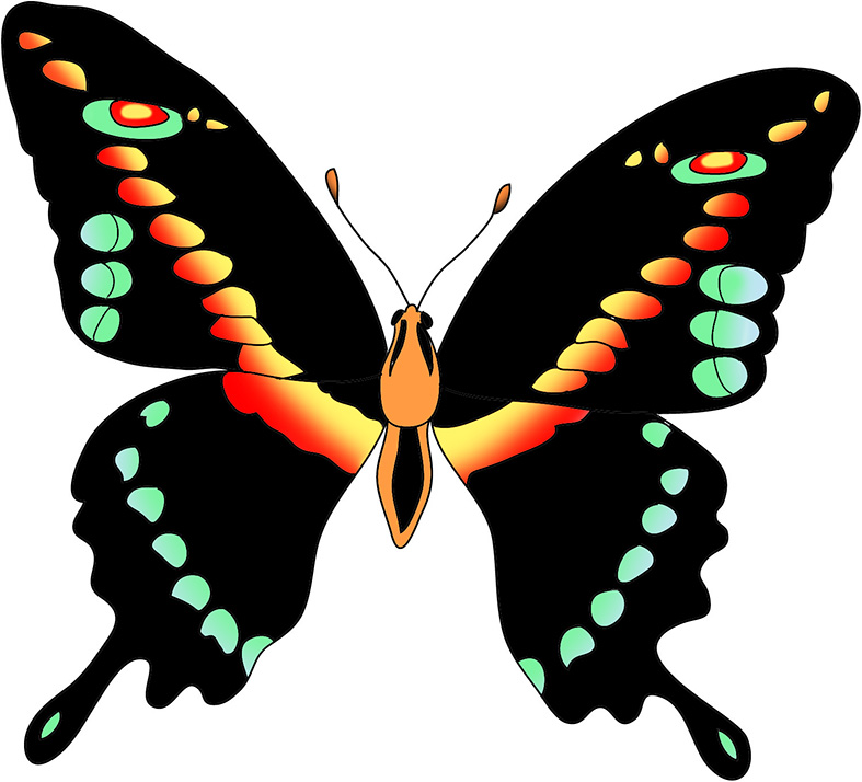 Butterfly black and white butterflies pictures free download clip art