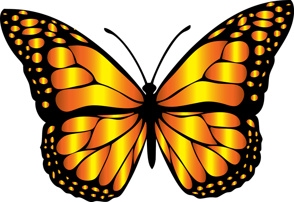 Butterfly clip art free download on