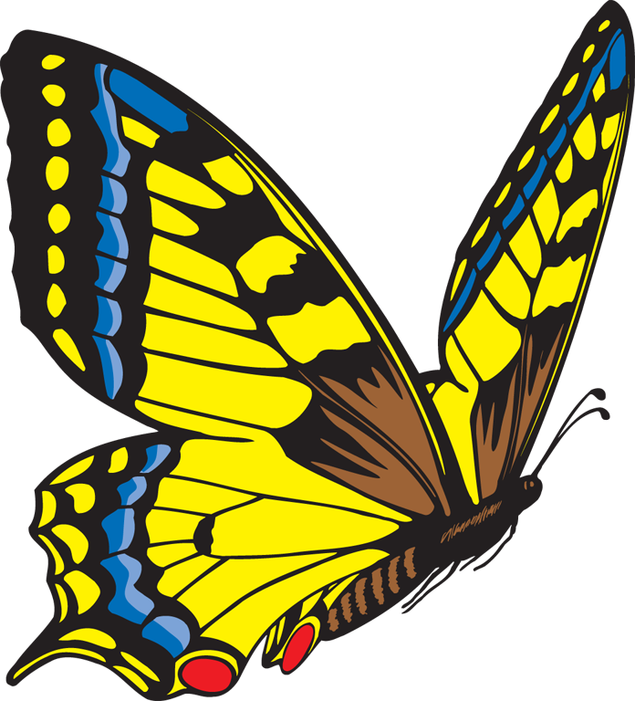 Butterfly clipart free images 4