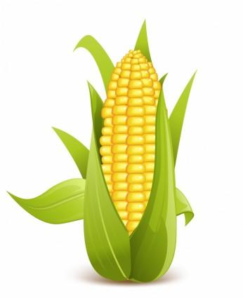 Corn clip art 4 clipartbarn