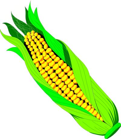 Corn clip art clipart