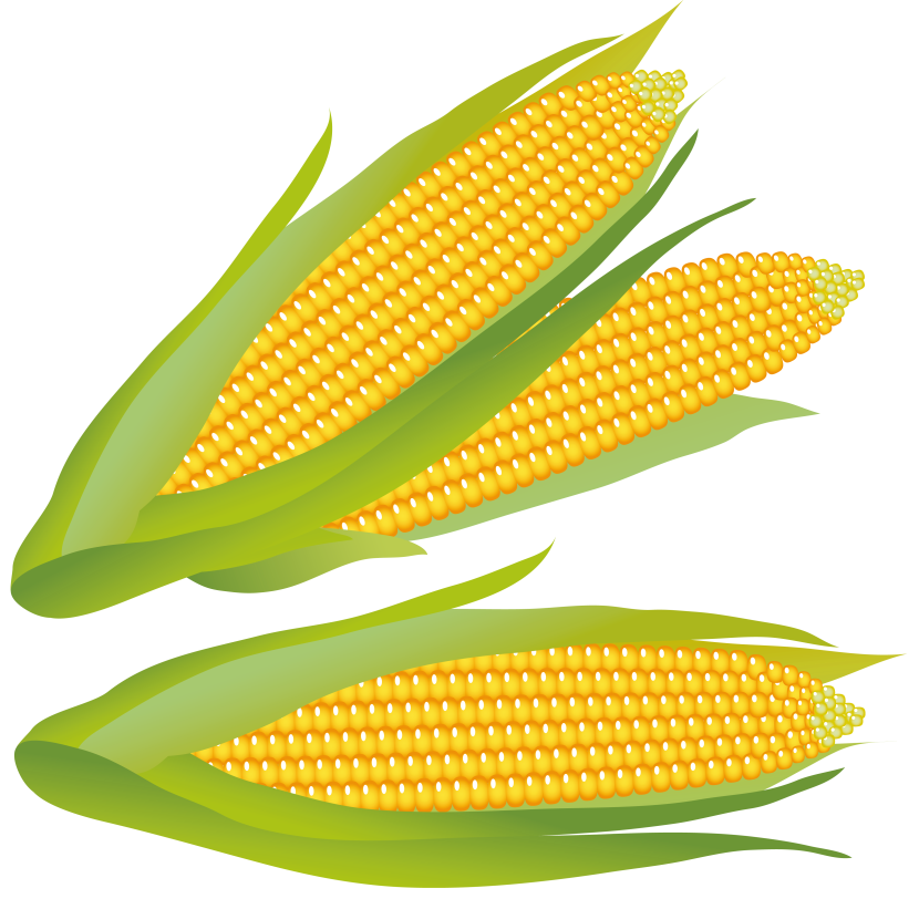 Corn clip art images free clipart clipartpost