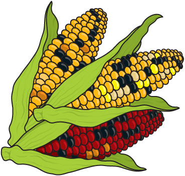 Corn clipart clipground