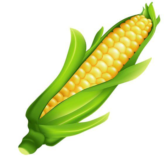 Corn clipart page 1 clipartbarn clipartpost
