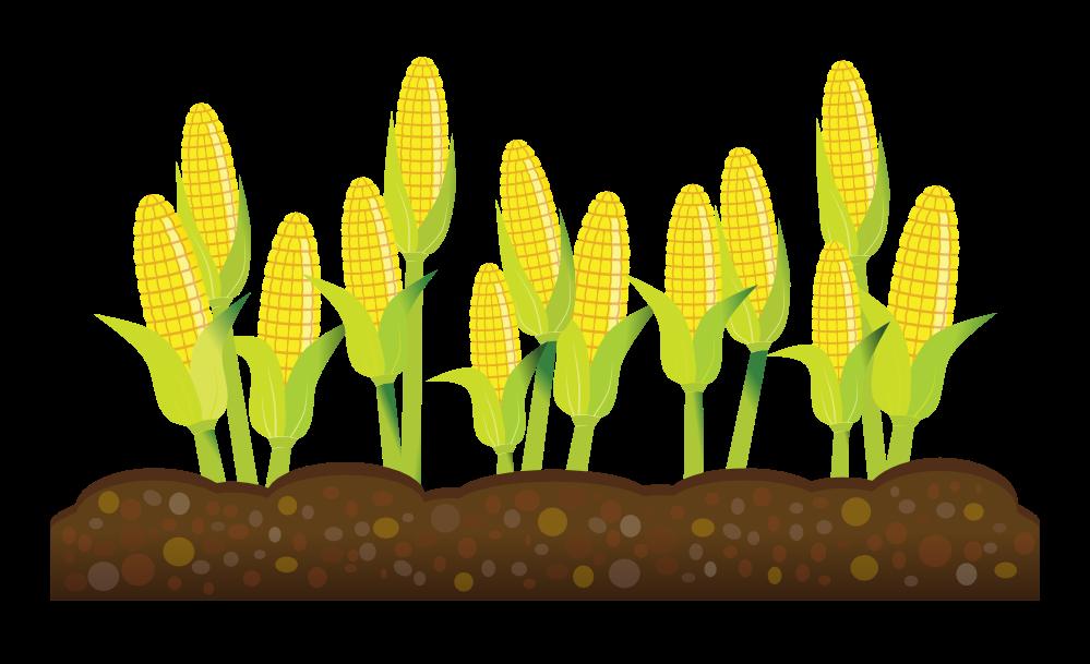 Corn clipart tiny 4