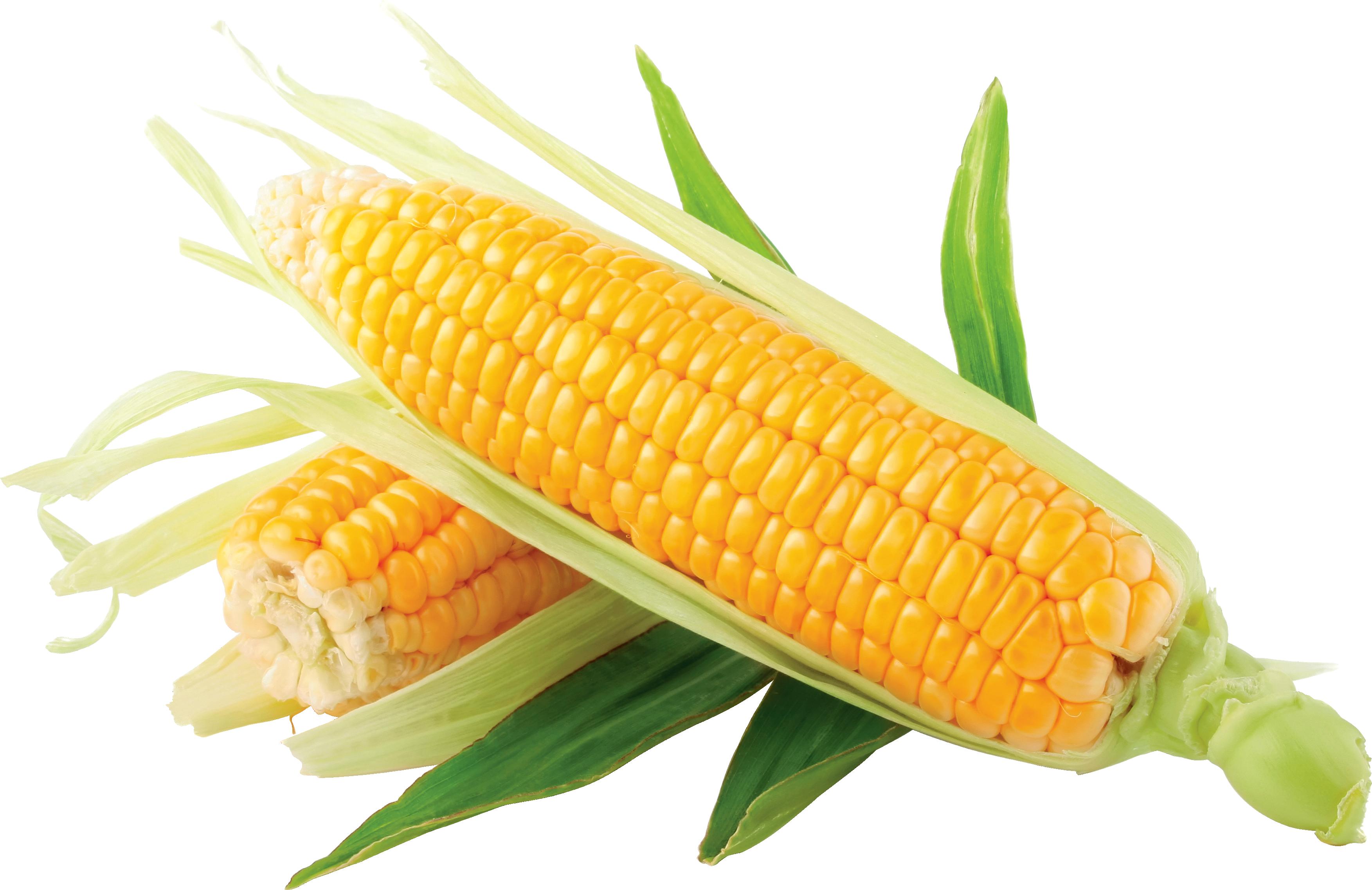 Corn images download yellow corn clip art