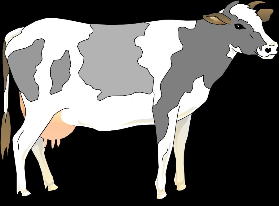 Cow clip art free microsoft christmas