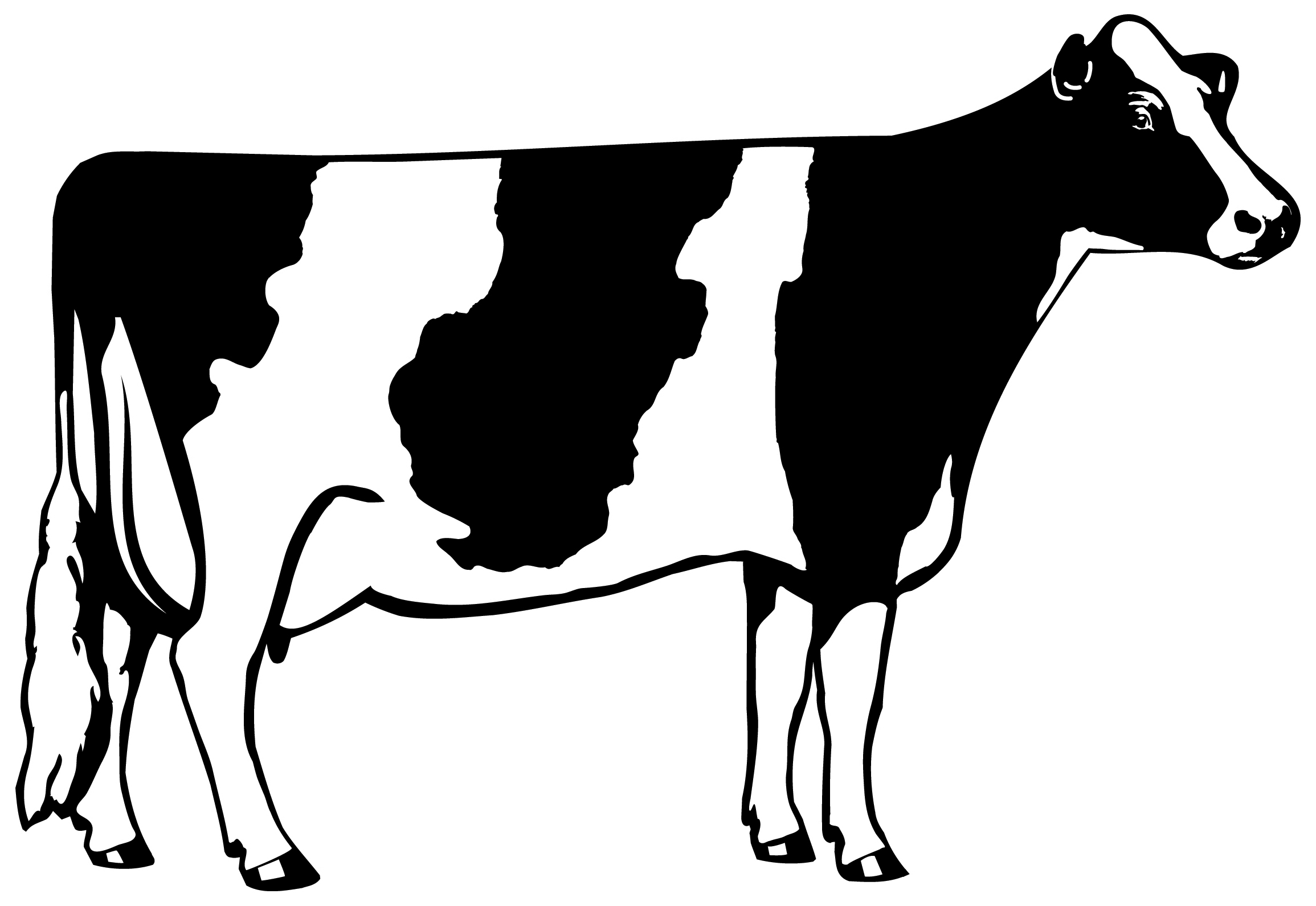 Cow clipart with transparent background free