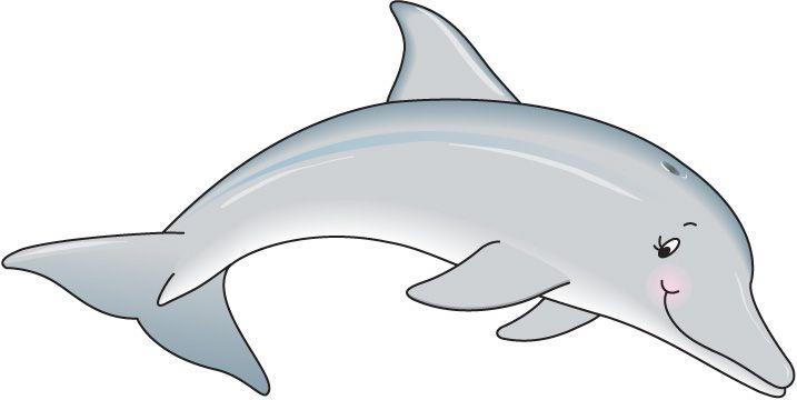 Dolphin clipart 4