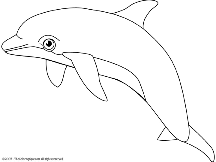 Dolphin clipart black and white pencil in color dolphin
