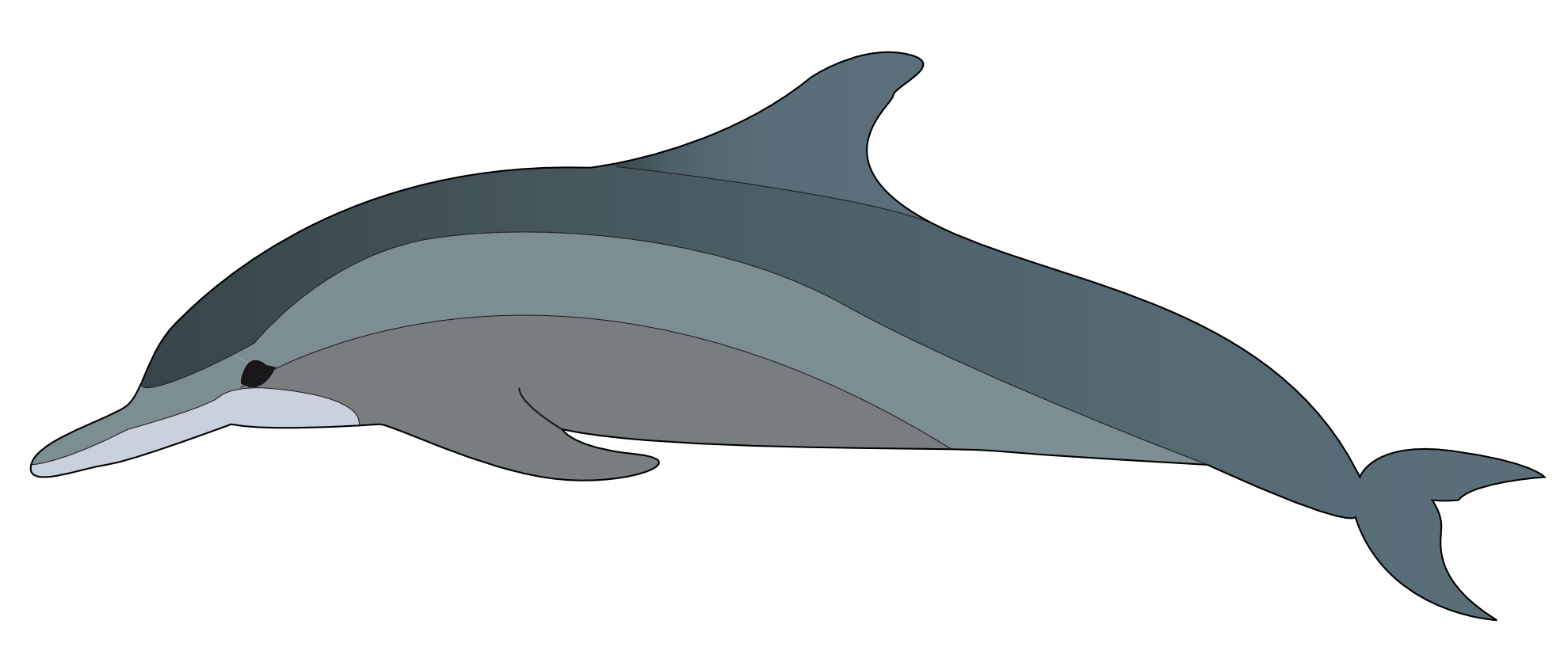 Dolphin clipart dolphin clip art 3 car pictures