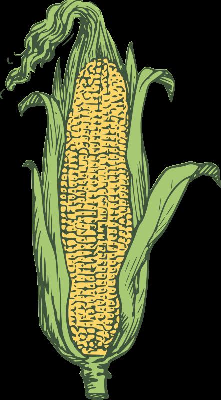 Free corn clipart