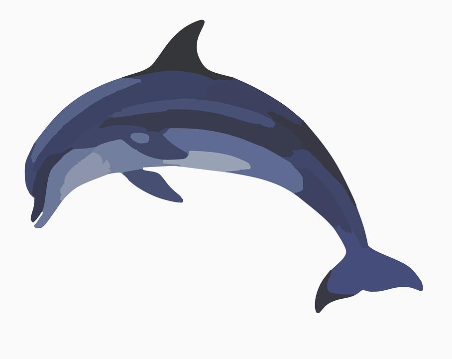 Free vector graphic dolphin mammal animal wildlife clip art