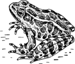 Frog  black and white frog clip art download