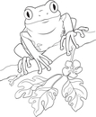 Frog  black and white tree frog clipart black and white clipartpig